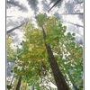 fog trees - 35mm photos