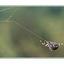 spider2 - 35mm photos