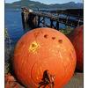 Kelsey Bay 1 - Vancouver Island