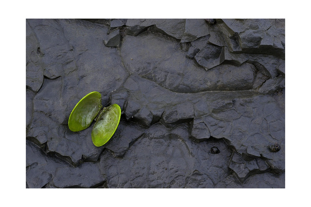 green shell Nature Images