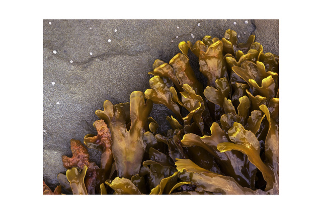 seaweed and stars Nature Images