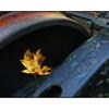 leaf wheel - Vancouver Island