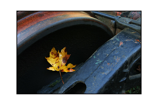leaf wheel Vancouver Island