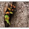 HawkGlen 09 - Nature Images