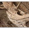 HawkGlen 07 - Nature Images