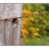 Old Fence Pano - Nature Images