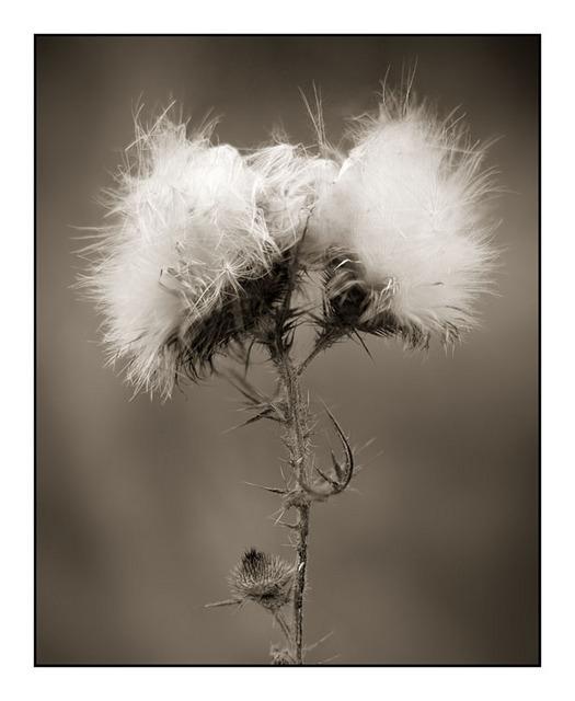 HawkGlen 02 Black & White and Sepia