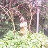 Tuin 17-10-07 02 - In de tuin 2007