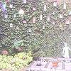 Tuin 17-10-07 03 - In de tuin 2007