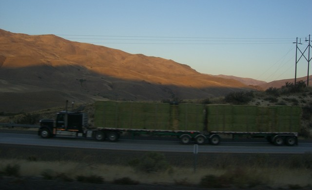CIMG8302 Trucks