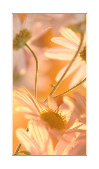 flower montage Close-Up Photography