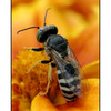 bee backside - Close-Up Photography
