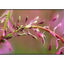 strath curved flower - Nature Images