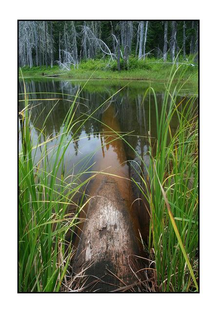 Old log pond Nature Images