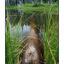 Old log pond - Nature Images