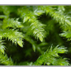 Moss Macro - Close-Up Photography