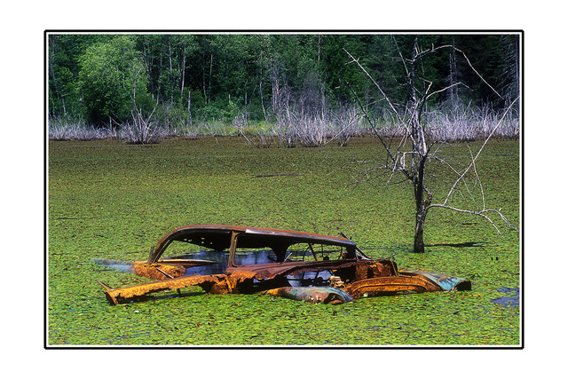 Swamp Car Abandoned