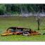 Swamp Car - Abandoned