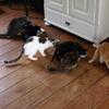 20-11-2009 004 - Picture Box