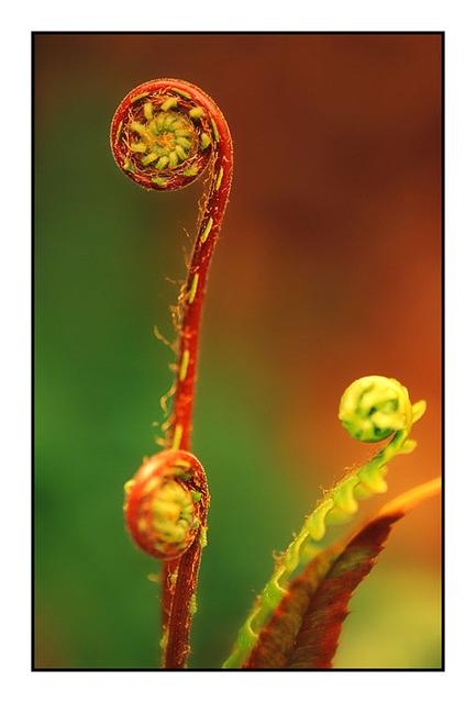 Fiddlehead 35mm photos