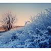 Winter at Deer Lake - 35mm photos