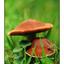Mushroom Parent and Child - 35mm photos