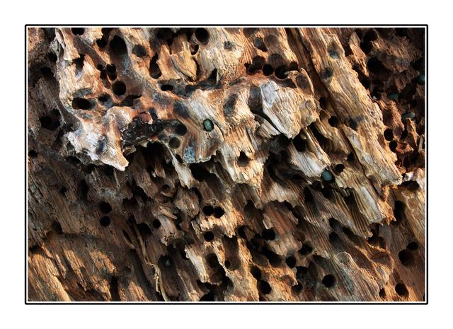 Eaten Driftwood Close-Up Photography