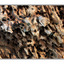 Eaten Driftwood - Close-Up Photography