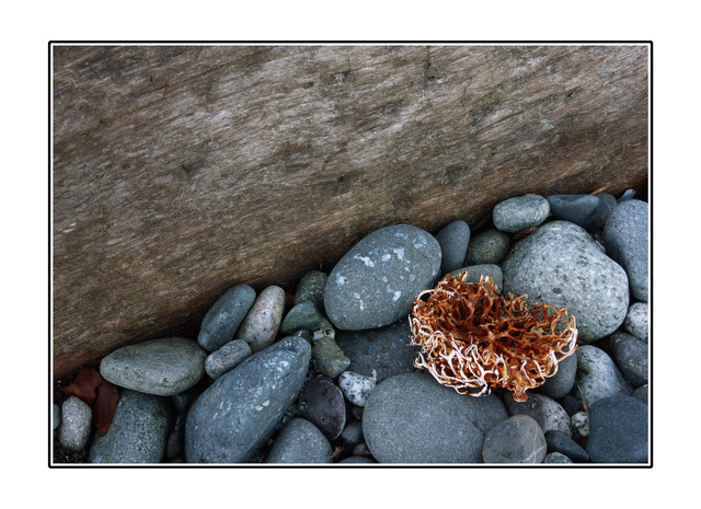 Miracle Beach Sponge - Close-Up Photography