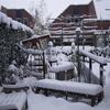 Wintertuin 20-12-09 01 - In de tuin 2009