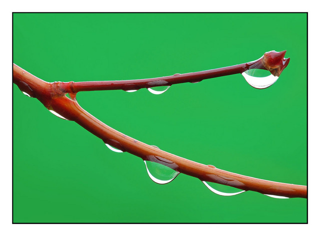 Backyard Droplets Close-Up Photography
