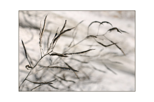 twig Nature Images