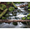 sealbay stream - Nature Images