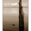 post in the water - Black & White and Sepia