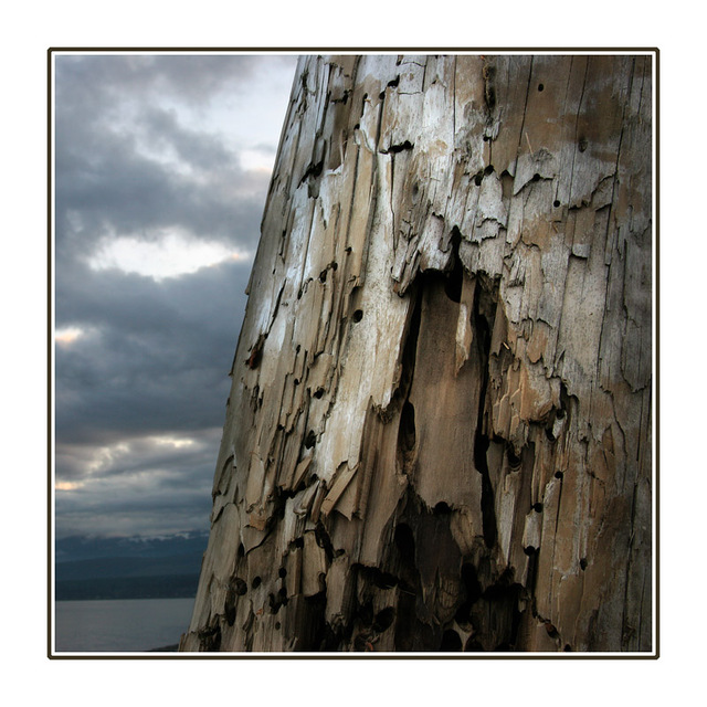 driftwood post Nature Images