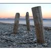 goose spit posts - Landscapes