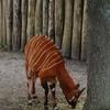 DSC 1625 - Burgers Zoo