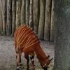 DSC 1626 - Burgers Zoo