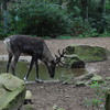 DSC 1627 - Burgers Zoo
