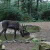 DSC 1628 - Burgers Zoo