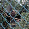 DSC 1642 - Burgers Zoo