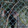 DSC 1643 - Burgers Zoo