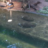 DSC 1645 - Burgers Zoo