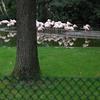 DSC 1647 - Burgers Zoo