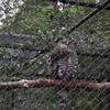 DSC 1649 - Burgers Zoo