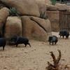 DSC 1697 - Burgers Zoo