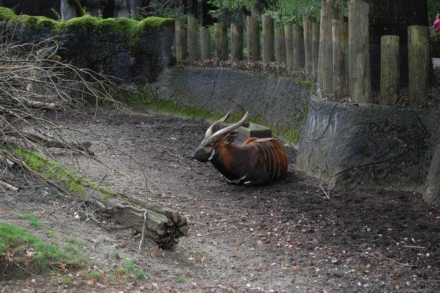 DSC 1610 Burgers Zoo