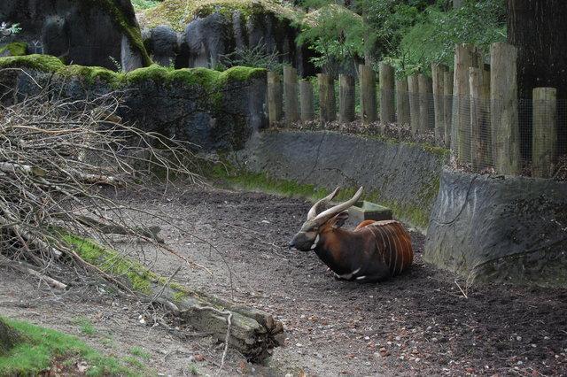 DSC 1611 Burgers Zoo