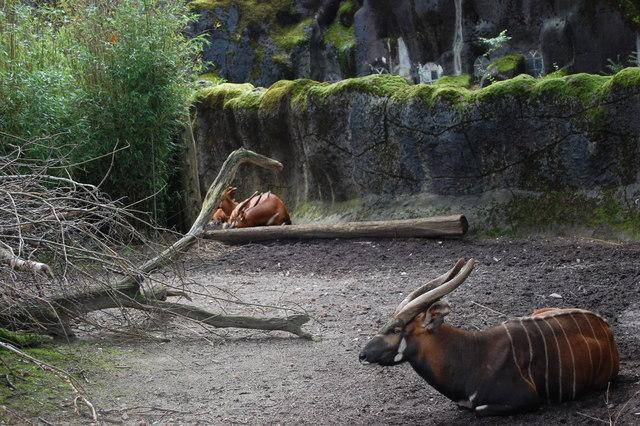 DSC 1612 Burgers Zoo