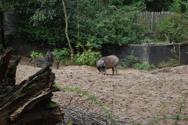 DSC 1613 Burgers Zoo